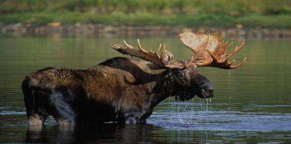 moose-hunting-008b